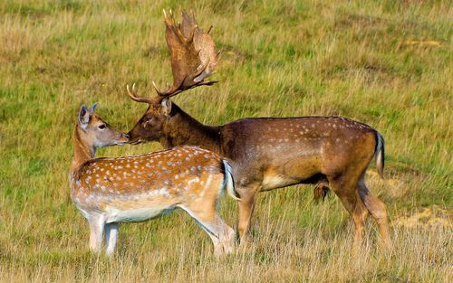 hunting-fallowdeer.jpg
